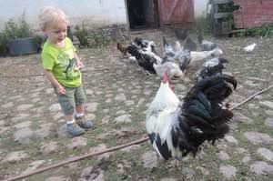 Vögel und Tiere auf Kæmpegård